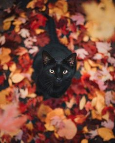 Amazing fall days call for cute kittens Animals And Pets, Baby Animals, Cute Animals, Safari Animals, Animals Images, Wild Animals, Crazy Cat Lady, Crazy Cats, Beautiful Cats