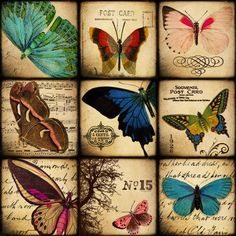 Vintage Butterflies 1x1 Square Inch (Inchies) Digital Collage sheet