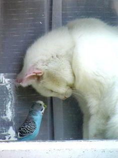 Amazing friendship #cat #bird