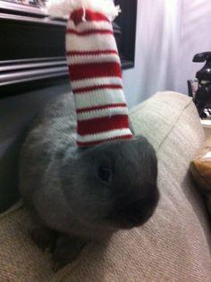 The Daily Bunny's Christmas 2013 Mega-Post 1
