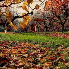 Dovremo trovare il modo per colorare le nostre giornate quando saranno cadute tutte le foglie  #cesena #HelloCesena #CesenaTurismo #volgoforlicesena #volgoemiliaromagna #igeremiliaromagna #igersfc #ig_forli_cesena #igerscesena #romagna #emiliaromagna #italia #italy #instagram #instagramitalia #instaphoto #instapic #naturelovers #nature #fall #fallcolors #fallfoliage #trees #autumn #autumncolours #leafs #autumnleaves by simonamorigi