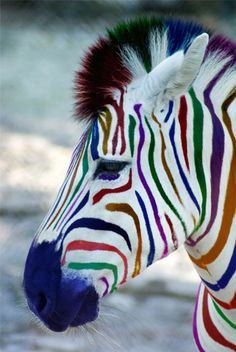 Check out this Photoshop Design for DesignCrowd (Community Contests) Baby Animals, Funny Animals, Cute Animals, Zebra Art, Baby Zebra, Colorful Animals, Art For Art Sake, Photoshop Design, Patterns In Nature