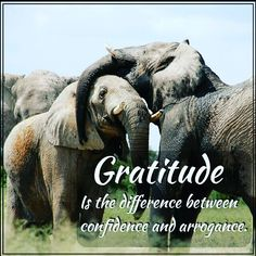 This is beyond true! Do you embrace gratitude and confidence? Living Quotes, Gratitude, Quotes To Live By, Confidence, Elephant, Instagram Posts, Be Grateful, Quote Life, Elephants