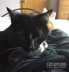 Catladyland: Cats are Funny: Changes to Catladyland ... and Cranky Cosmo