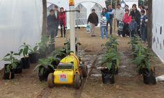 Inteligencia artificial para invernaderos