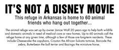 It's Not a Disney Movie…