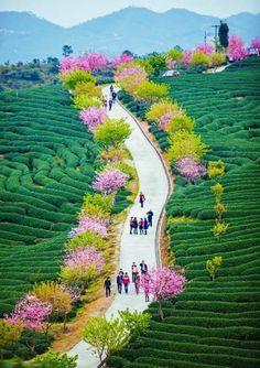 Foto de www.madeinindia.net.au
