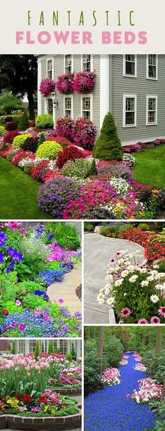 Fantastic Flower Beds! • Take some tips from design pros, and start designing that next flower bed! Next Flowers, Love Flowers, Exotic Flowers, Purple Flowers, Ranunculus Flowers, White Flowers, Amazing Gardens, Beautiful Gardens, Beautiful Flowers Garden