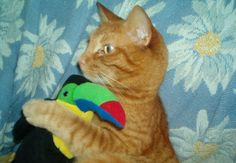 Gryffindor with his Toucan, he bought this home one day. No clue where it came from!  Submitted by Julia