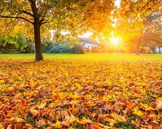 The fall is one of the best times to make your move. Aside from avoiding the sweltering heat while lifting heavy boxes and organizing your belongings ...