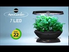 Miracle-Gro AeroGarden 7 LED  30 day Timelapse