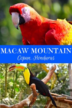 Head to Macaw Mountain in Copan, Honduras for an ethical, up-close-and-personal experience with exotic tropical birds.