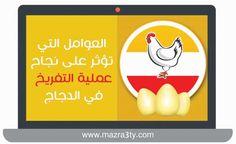 العوامل التي تؤثر علي نجاح عملية التفريخ في الدجاج - mazra3ty | مزرعتي