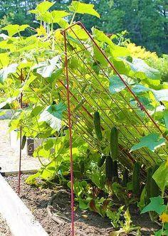 Очередная идея для огородников. Хочу познакомить вас с очень практичным и удобным методом выращивания огурцов на наклонной шпалере. Все, кто попробовал данную технологию, отмечают ее эффективность …