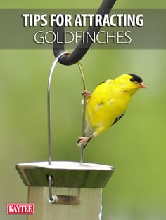 more bright yellow goldfinches in your yard with these tips! finchfeedersSee more bright yellow goldfinches in your yard with these tips! Garden Bird Feeders, Bird House Feeder, Garden Birds, Garden Totems, Garden Whimsy, Garden Junk, Bird House Plans, Bird House Kits, Finch Bird House