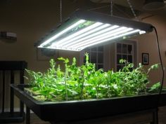 Explanation of T5-Grow lights and comparison of T-5 and LED grow lights.