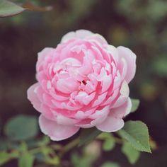 #観葉植物 #ガーデニング #グリーンインテリア #gardening  #園芸 #花 #花部 #フラワー#花のある生活#花のある暮らし #flower #flowers #flowerstagram #florist #floral #blossom #bloom  #greenthumb #greenlife #plants#containergarden  #botanical#ボタニカル  #アプリ#greensnap  #igersjp