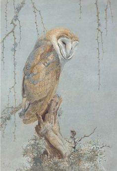 Winifred Austen (1876-1964) - Barn owl, pencil and watercolour heightened with bodycolour, 51.4 x 34.9 cm. 1910.
