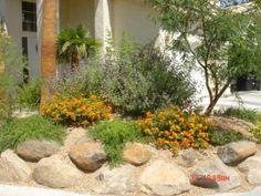 High Desert Landscape & Design. High Desert Landscaping, Home Landscaping, Garden Inspiration, Garden Ideas, Patio Ideas, Backyard Ideas, Dry Garden, Garden Fun, Landscape Design