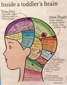 On the Lighter Side: Inside a Toddler's Brain - - Pinned by @PediaStaff – Please Visit  ht.ly/63sNt for all our pediatric therapy pins