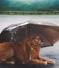 Daily Pictures: Stunning Dogs Photos by Jessica Trinh