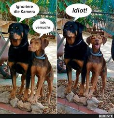 Ignoriere die Kamera.. | Lustige Bilder, Sprüche, Witze, echt lustig
