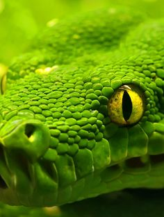 Photography: Green snake- up close