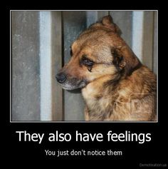 Some people are too self-centered and selfish to see that animals have feelings too...