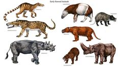 prehistoric mammals - Google Search