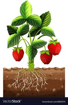 Fresh strawberry on the branch vector image on VectorStock Spring Activities, Craft Activities For Kids, Crafts For Kids, Basket Drawing, Early Childhood Centre, Branch Vector, Garden Mural, Farm Images, Paper Doll House