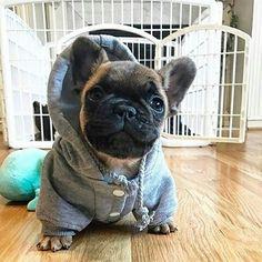 Welcome to my crib... ❤ French Bulldog Puppy
