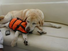 labradors on a boat--I love how the little one is wearing a life jacket!