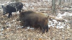 See the Nutritional Value of 24 Wild Game Animals — The Hunting page Barley Nutrition, Broccoli Nutrition, Healthy Nutrition, Nutritional Value, Nutrition Shakes, Animal Games, Outdoor Outfit, Hunting, Animals