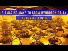 3 Amazing Ways to Grow Hydroponics - The Complete Guide Indoor Aquaponics, Hydroponics System, Aquaponics System, Hydroponic Gardening, Aquaponics Plants, Ebb And Flow Hydroponics, 10 Gallon Fish Tank, Hydro Systems, Grow Tent