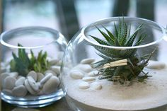 succulents-in-fishbowls