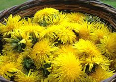 This spring I vowed I was going to make use of the happy little flower that I grew up thinking was the enemy. I use this dandelion flower syrup on waffles!
