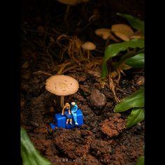 Just the two of us ( well I'm a fun guy aka fungi ! Miniature Calendar, Tiny Mushroom, Miniature Photography, Tiny World, Mini Mini, Funny Life, People Art, Mini Books, Dream Garden