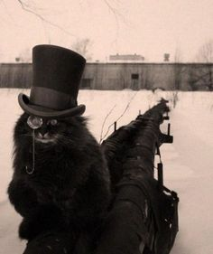 Steampunk Style for Halloween Inspiration Crazy Cat Lady, Crazy Cats, Gato Steampunk, Steampunk Animals, I Love Cats, Cool Cats, Cat Hat, Jolie Photo, Here Kitty Kitty