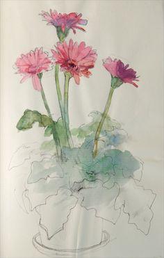 Gerbera watercolor sketch