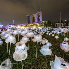Saw these lovely moonflowers popping across your social media? Join us at the I Shoot I Light Photo Walk this Friday with @lemjaylucas at Marina Bay and capture amazing night images from the event!  . Visit our Facebook page for more info  via Canon on Instagram - #photographer #photography #photo #instapic #instagram #photofreak #photolover #nikon #canon #leica #hasselblad #polaroid #shutterbug #camera #dslr #visualarts #inspiration #artistic #creative #creativity