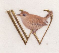 Wren - watercolour, gold leaf on vellum. Kathy PIckles.  She is quite impressive.