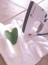 Wax Paper Pressing to preserve leaves for a Nature Journal (Week 10) …