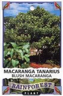 Native List - Blush Macaranga