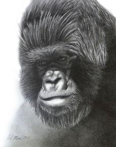 ORIGINAL gorilla pencil drawing 8'' X 10'' by PerpetualGallery, $125.00