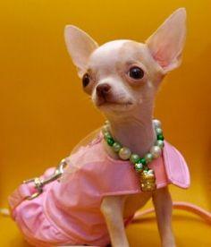 Pink_Dress_iStock_000002926698XSmall2_1242264293