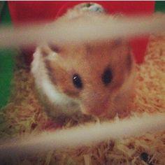 Eleanor the hamster!