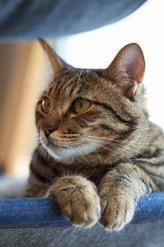 .I am a very good kitty