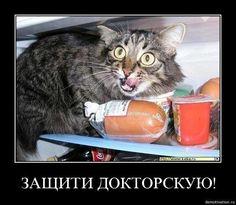 Защити докторскую %)