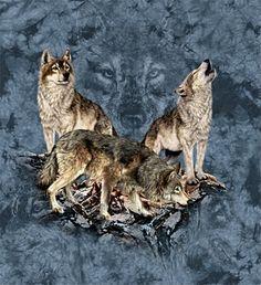 Hidden seven wolves images by Steven Michael Gardner