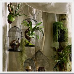 "Just showing different ways to bring ""Zen"" in. bird cages= great place to hang orchids and ferns in the house! Hanging Bird Cage, Bird Cages, Hanging Plants, Air Plants, Garden Plants, Indoor Plants, Indoor Gardening, Fern Planters, Wall Planters"